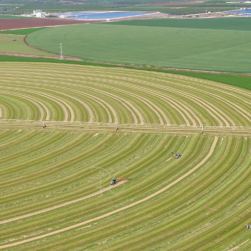 Agriculture at the Jezreel Valley